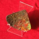 Ammolite Heilstein fächerformAmmolite Heilstein fächerform